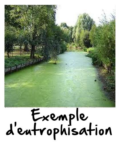 Exemple d'eutrophisation dans une rivière